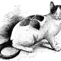 Curiously marked white and black cat