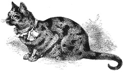 Example of a finely-marked Tortoiseshell Cat