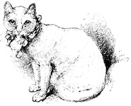 White cat - prize winner in 1879