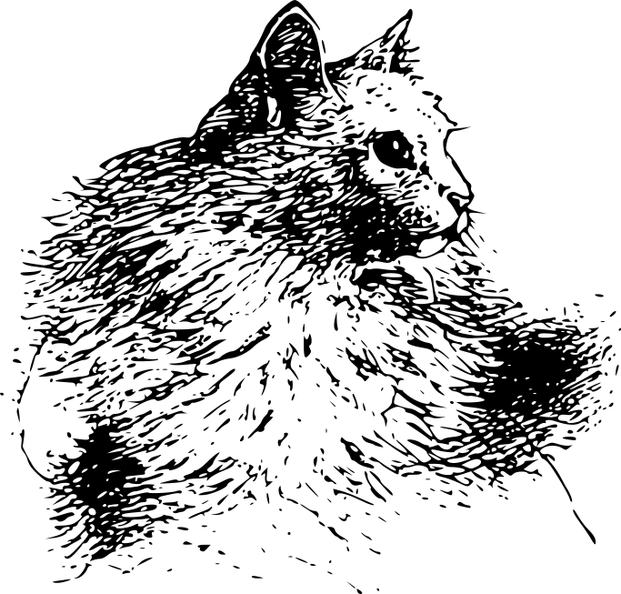 a white Persian - Muff.png