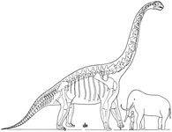 The Largest Known Dinosaur