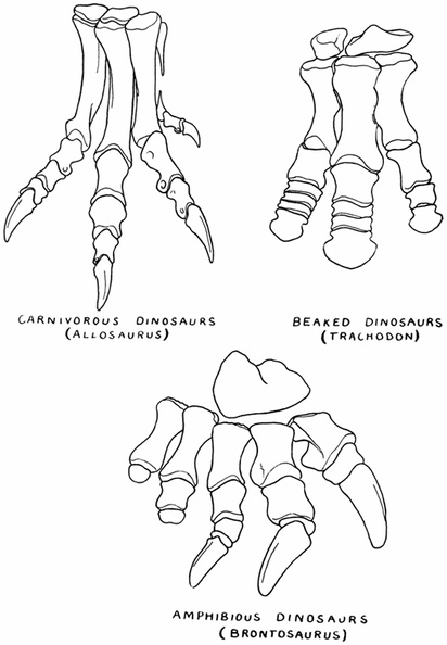 Hind Feet of Dinosaurs.jpg