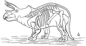 Outline sketch restoration of Triceratops