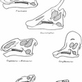 Skulls of Iguanodont and Trachodont Dinosaurs