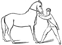 Teaching the horse to back