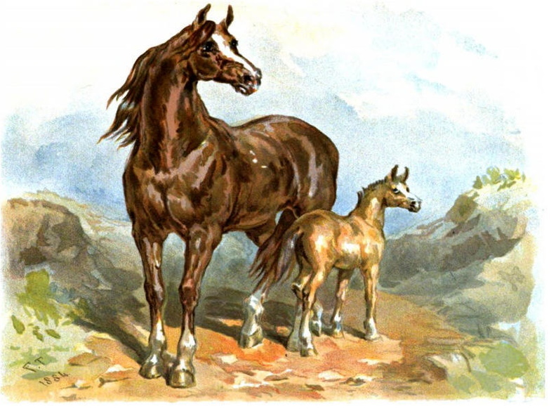 Brown horse and foal.jpg