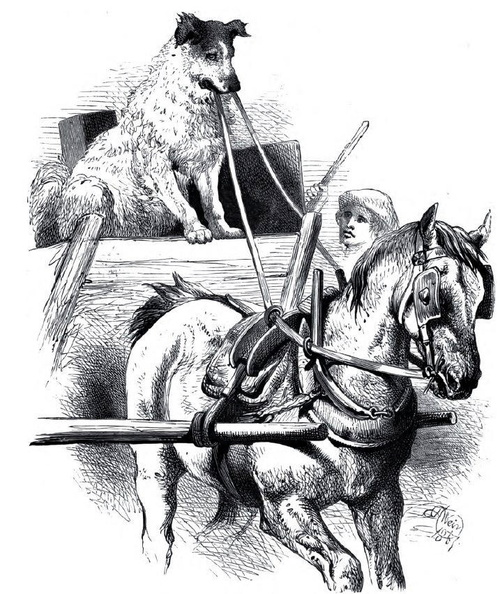 Horse and cart with dog driver.jpg
