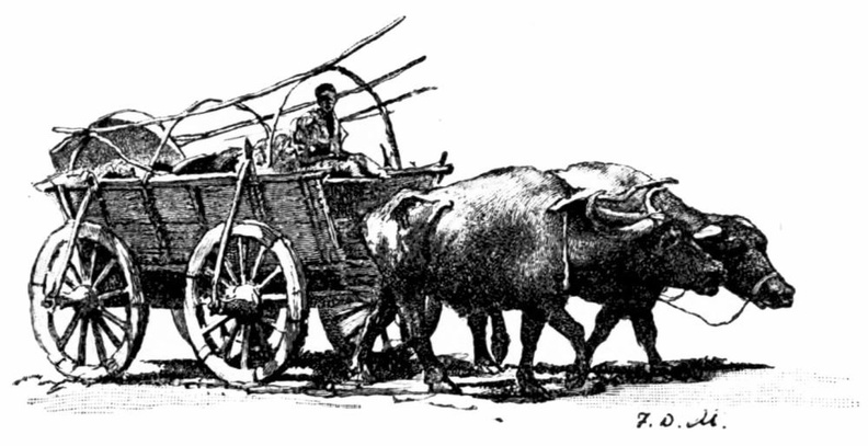 Bulgarian Buffalo Cart.jpg