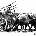 Bulgarian Buffalo Cart