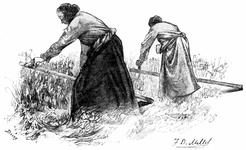 Peasant Girls Mowing