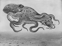 An Eight-Armed Cuttlefish or Octopus Attacking a Small Crab