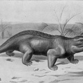Pariasaurus - An Extinct Vegetarian Triassic Reptile