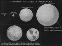 Comparative size of molecules