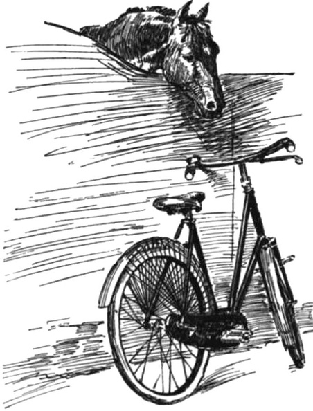 Horse looking at a bicycle.jpg