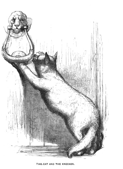 The Cat and the Knocker.jpg