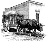 Mexican Ox-cart