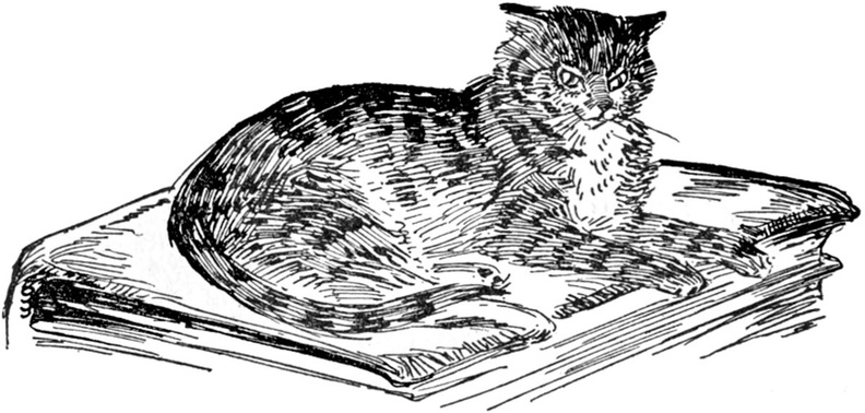 Cat on an old book.jpg