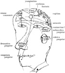 Diagram of the senses, the humours, the cerebral ventricles, and the intellectual facultie