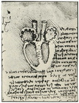 Leonardo Da Vincis diagram of the heart