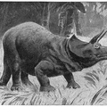 The gigantic three-horned Reptile, Triceratops
