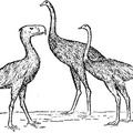 The Three Giants, Phororhacos, Moa, Ostrich