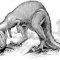 The Horned Ceratosaurus, a Carnivorous Dinosaur