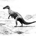 Thespesius, a Common Herbivorous Dinosaur of the Cretaceous