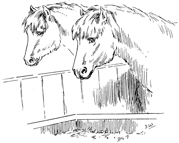 Two horses looking at their food.jpg