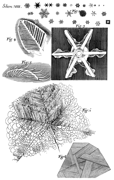 Several Observables in the six-branched Figures form'd on the surface of Urine by freezing.png