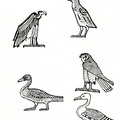 Egyptian treatment of birds. from hieroglyphics of the 18th Dynasty