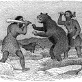 Palæolithic Men Attacking Cave Bear