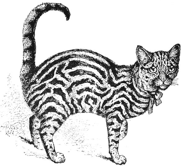Example of a properly-marked Brown Tabby.jpg