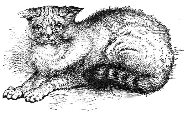 Wild Cat shown at the Crystal Palace Cat Show, 1871.jpg